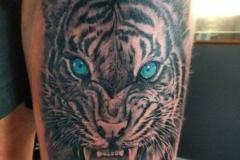 Blue-Eyed-Tiger-Tattoo